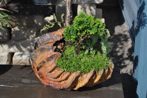 Customer Bonsai In Iker Pots Iker Bonsai Pots